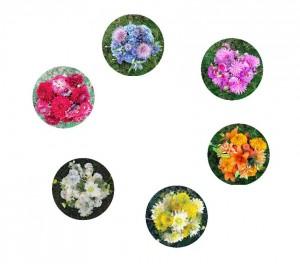 Цветочный цветовой круг